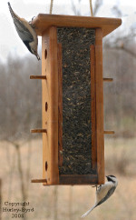 Chickadee and Nuthatch on Tube Bird Feeder