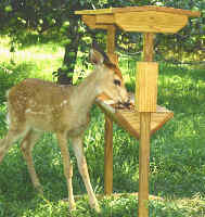 Fawn Deer at Covered Deer Feeder