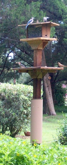 Mourning Dove bird feeder and Seed Catcher Tray