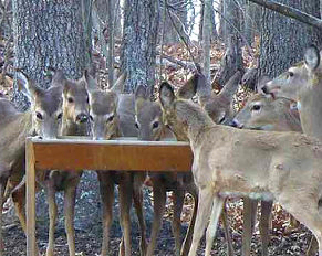 Deer Feeder Introduction Page