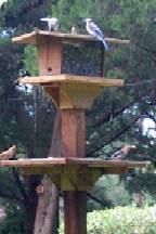 Blue Jays and Cardinals on Large Mourning Dove Bird Feeder