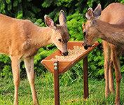 Our Very Popular Deer Feeder